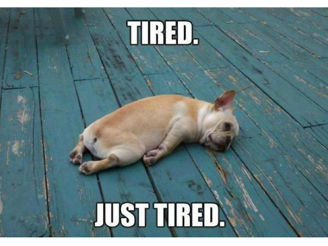 funniest-ever-dog-memes-on-momtastic-tired